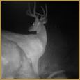 2011 C and S Trailcam Pic