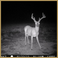 2012 C and S Trailcam Pic